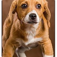 Adopt A Pet :: Harry - Owensboro, KY