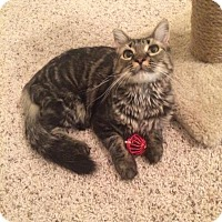 Adopt A Pet :: Lulu - Chesterfield Township, MI