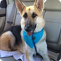 Adopt A Pet :: Lily - Denver, CO