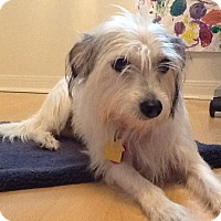 Adopt A Pet :: Daisy in Houston - Austin, TX