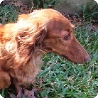 Adopt A Pet :: Cora Crosswind - Houston, TX