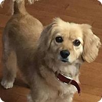 Adopt A Pet :: Daisy - Edmonton, AB