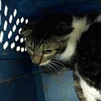 Adopt A Pet :: HAMPTON - Conroe, TX
