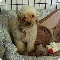 Adopt A Pet :: Janna - Mukwonago, WI