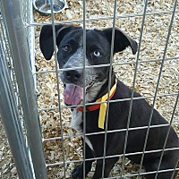 Adopt A Pet :: Dede - Livingston Parish, LA