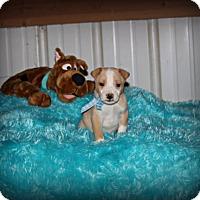 Adopt A Pet :: Lucky - Brattleboro, VT