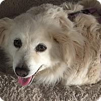 Adopt A Pet :: Blanche - San Diego, CA