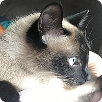 Adopt A Pet :: Misty - Cincinnati, OH