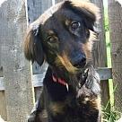Adopt A Pet :: Tatum