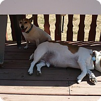 Adopt A Pet :: Penny Rose - Wisconsin Dells, WI