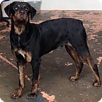 Adopt A Pet :: LOGAN - Missouri City, TX