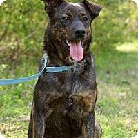 Adopt A Pet :: Alex - Charleston, AR