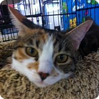 Adopt A Pet :: Sabrina N - Sacramento, CA