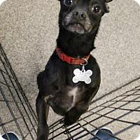 Adopt A Pet :: Croft - Kennesaw, GA