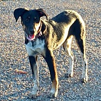Adopt A Pet :: Molly - Clifton, TX