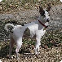 Adopt A Pet :: Olaf - Richardson, TX