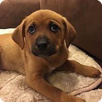 Adopt A Pet :: Hope - Mount Laurel, NJ