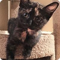 Adopt A Pet :: DeenaW - North Highlands, CA