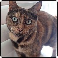 Adopt A Pet :: Dixie - Colorado Springs, CO