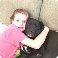 Adopt A Pet :: Juneau - Summerville, SC