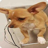Adopt A Pet :: A1053429 - Bakersfield, CA