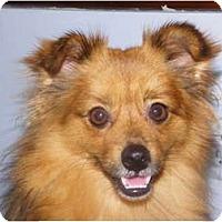 Adopt A Pet :: BOWEN - Hesperus, CO