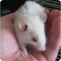Adopt A Pet :: Tiny Tim - Cincinnati, OH