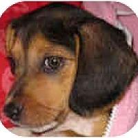 Adopt A Pet :: Gracie - Portland, OR