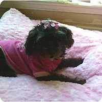 Adopt A Pet :: CANDY - Houston, TX