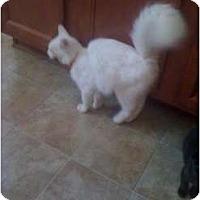 Adopt A Pet :: Ivories-Snowball - Mobile, AL
