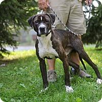 Adopt A Pet :: Brady - Springfield, IL