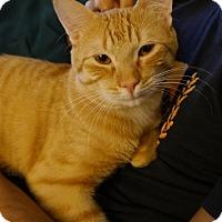 Adopt A Pet :: Trevor - Long Beach, NY