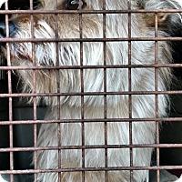 Adopt A Pet :: Stewart - Simi Valley, CA