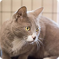 Adopt A Pet :: Petey - Fountain Hills, AZ