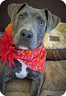 Terrier (Unknown Type, Medium) Mix Dog for adoption in Flint, Michigan - Carly