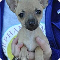 Adopt A Pet :: Olivia - Atlanta, GA