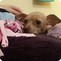 Adopt A Pet :: Bonita - Santa Ana, CA