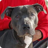 Adopt A Pet :: Brenda - Las Vegas, NV