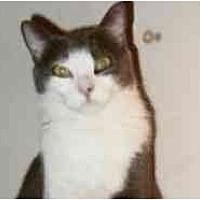 Adopt A Pet :: Mallory - Pasadena, CA