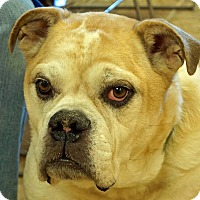 Adopt A Pet :: Knuckles - Sprakers, NY