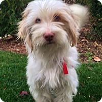 Adopt A Pet :: COOKIE - Irvine, CA