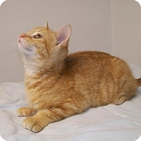 Adopt A Pet :: Rooney - Norwich, NY
