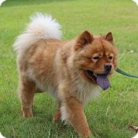 Adopt A Pet :: Barney - Tucker, GA