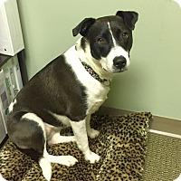 Adopt A Pet :: Jersey - Knoxville, TN