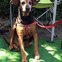 Adopt A Pet :: Marisol - Oceanside, CA