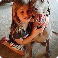 Adopt A Pet :: Indiana (Indy) - Grand Haven, MI
