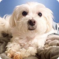 Adopt A Pet :: Ruby - Surrey, BC