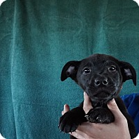 Adopt A Pet :: Gracie - Oviedo, FL