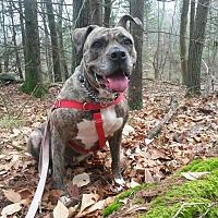 Adopt A Pet :: Athena - Acushnet, MA