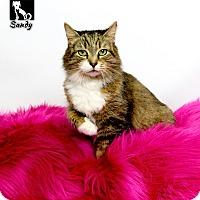 Adopt A Pet :: Sandy - Tomball, TX